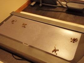 Cat Poop on treadmill