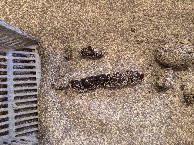 Cat Pooping outside the litter box solved