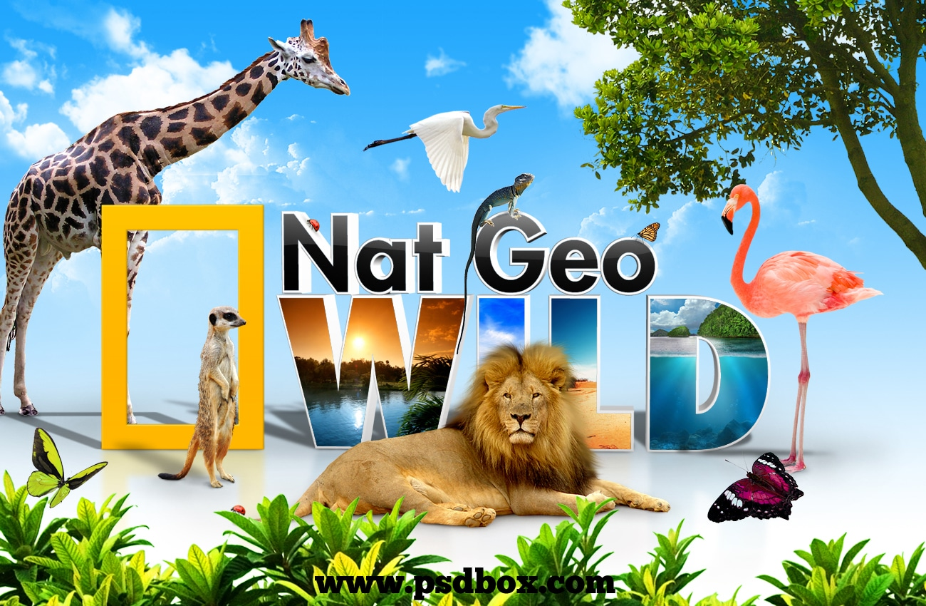 National Geographic Wild Side Of Cats And Howie Mandels Animals Doing Things