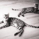 Cat Behaviorist Mieshelle