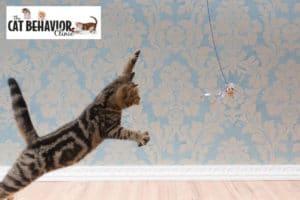 Cat Behaviorist San Francisco