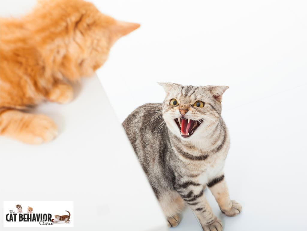 closeup of two cats in fighting conflict