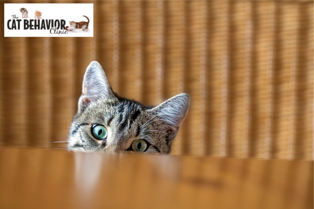 Cat Behavior Problem? Solving Cat Behavior Issues Since 1999