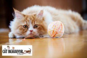 Cat Compulsive Pica