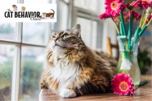 Cat Behaviorist Portland Oregon