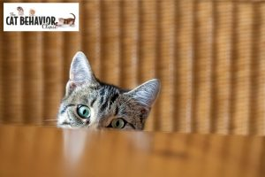 Cat middening behind table