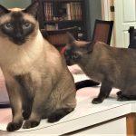 Cat Behavior Testimonial Mieshelle