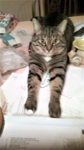 Cat that urinates and urine-marks