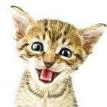 Cat Behavior Testimonial thumbnail image