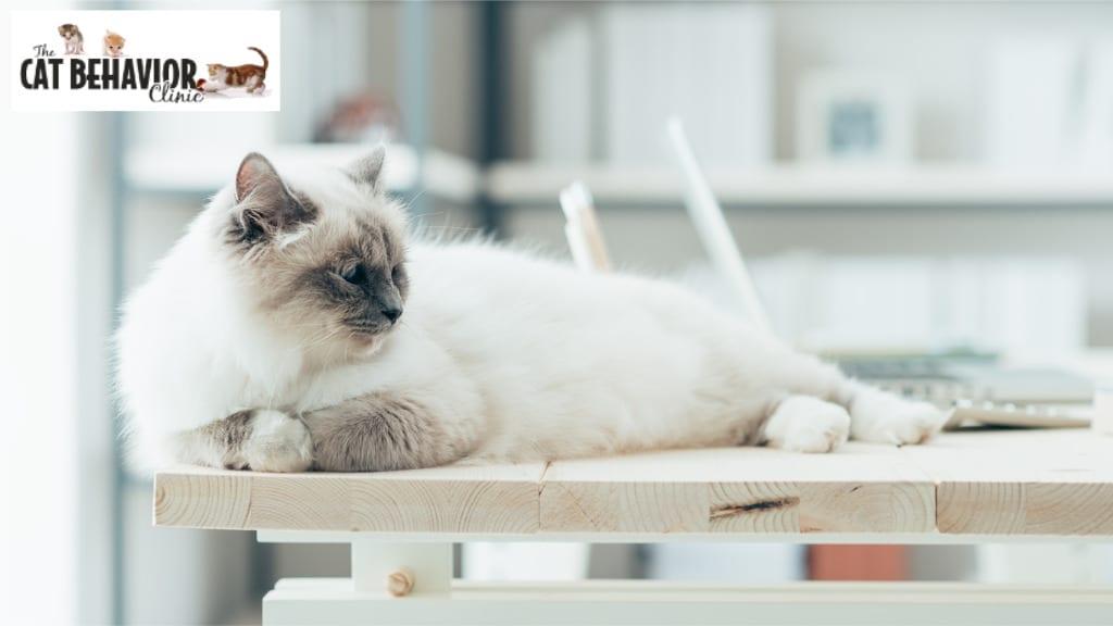 The Cat Behavior Clinic Cat in Clinic