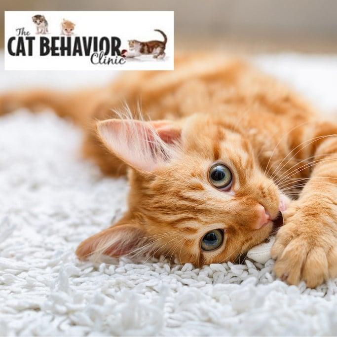 The Cat Behavior Clinic orange cat photo