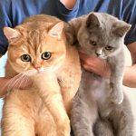 Cat Behaviorist Solved Cases Two Cats